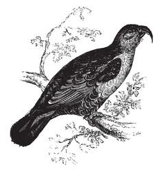 Long billed parrot vintage vector