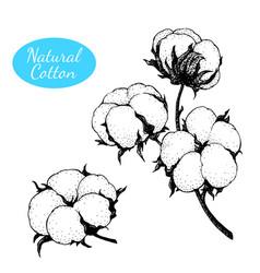 set hand drawn cotton plant branch vector image