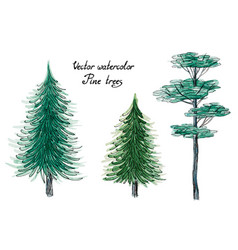 Watercolor pine trees vector