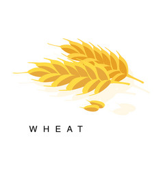 wheat ear infographic with realistic vector image