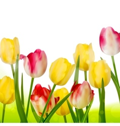 Bouquet of tulips isolated on white EPS 10 vector image