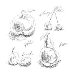 set of fruit vector image vector image