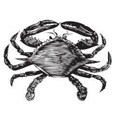 Blue Crab engraving vector image