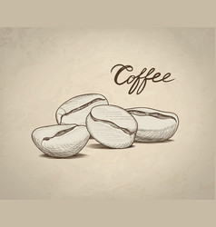 Coffee beans sketch drink coffee banner line art vector