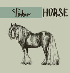 Farm tinker cob draft horse vector