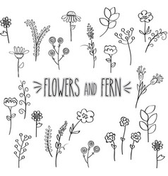 Flower and fern outline hand drawn vector