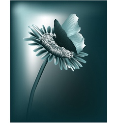 Night butterfly vector image vector image