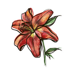 Red lily vector