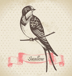 Swallow bird hand-drawn vector