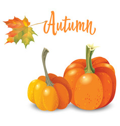 two orange pumpkin isolated on white background vector image