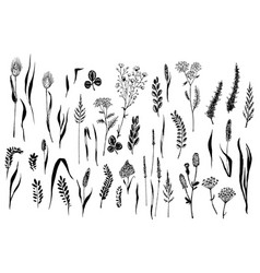 wild herbs and flowers painted black line vector image