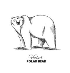 Polar bear hand drawn vector image vector image