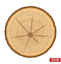 Cross section tree trunk vector