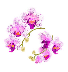 Branches orchids purple and white flowers vector