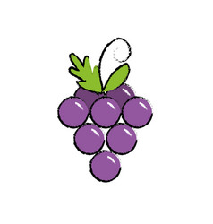 Delicious and healthy grape fruit vector