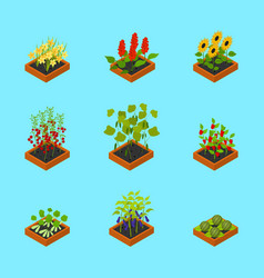 Plant seedling isometric view vector