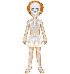 Skeletal system of human boy vector