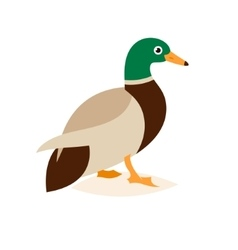 Beautiful duck in a flat style vector