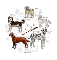 Dogs sketches background with great dane vector