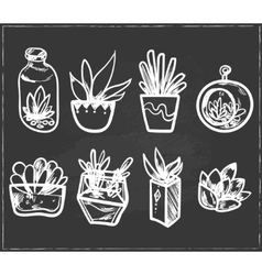 Hand drawn set of cactus in the pots vector
