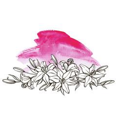 lily flower floral element botanical vector image