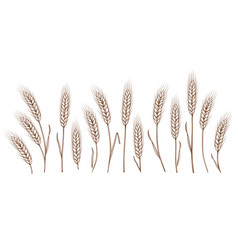 set of hand drawn wheat ears vector image