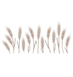Set of hand drawn wheat ears vector