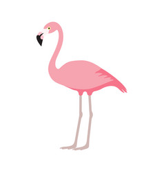 pink flamingo icon over white background vector image