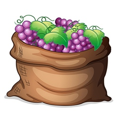 A sack of grapes vector
