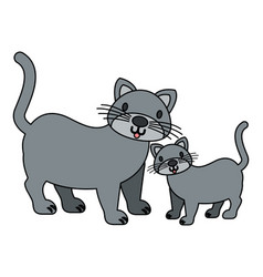 cats pet on white background vector image