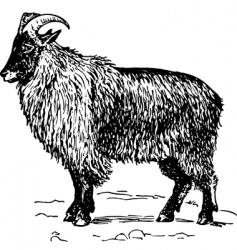 goat hemitragus vector image
