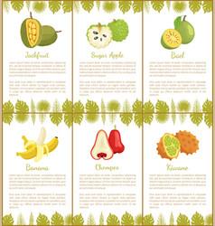 jackfruit sugar apple bael banana champoo posters vector image