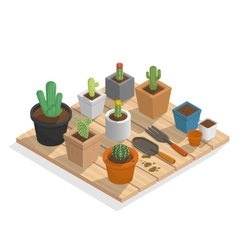 Plant cactus in many pot on wood isometric vector