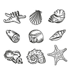 sea shells hand drawn sketch style isolated on vector image