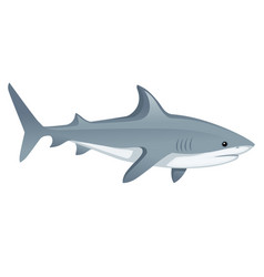 shark with mouth closed giant apex predator vector image
