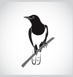 bird on white background oriental magpie robin vector image vector image