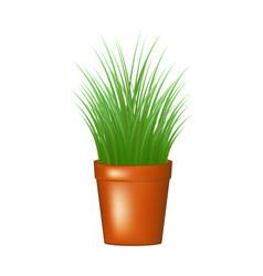Decorative grass in flowerpot vector
