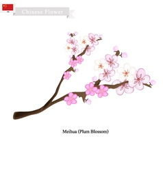 Meihua or Plum Blossom A Popular Flower in China vector image