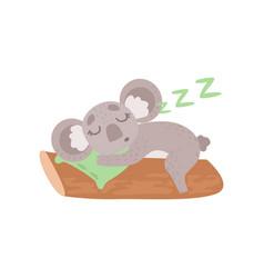 cute koala bear sleeping on tree branch funny vector image