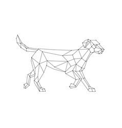 Labrador walking wireframe low polygon vector