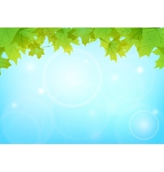 maple leaves and blue sky vector image vector image