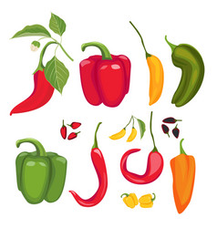 peppers hot spices fresh jalapeno paprika cayenne vector image