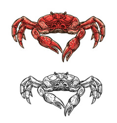 Seafood crab marine crustacean sketch vector