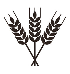 Sheaf wheat engraving vector