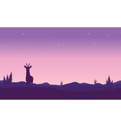 Silhouette of zebra in hills vector image vector image