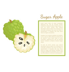 sugar-apple sweetsop custard poster frame text vector image