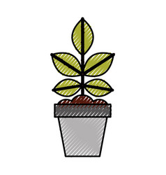 cultivated plant in pot vector image