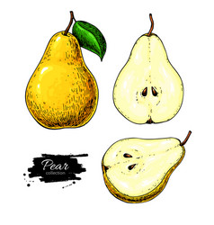 Pear drawing isolated hand drawn full pear vector