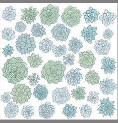Hand drawn succulentes vector