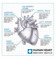 Medical internal organ concept vector